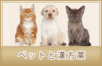 ペット用オーダーメイド漢方薬